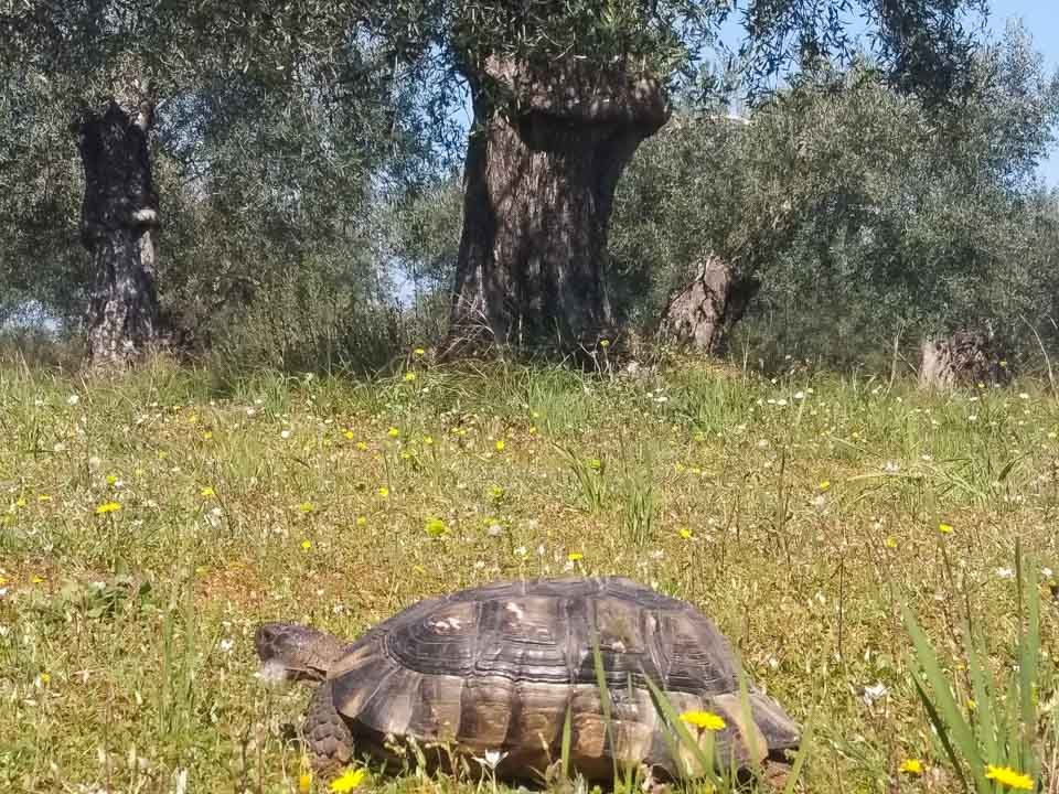 LIFE-IN-THE-OLIVE-GROVE3