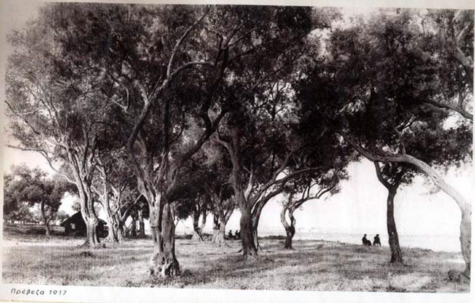 bio-green-oliveoil_enetikos_elaionas_1_preveza1917-1
